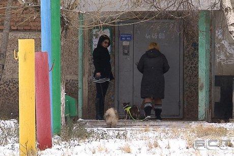 Собаку убили наглазах у владельца вБратске