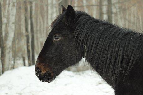Жительница Братска перевела мошеннику 60 тыс. руб., пытаясь реализовать коня