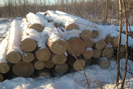 «Чёрный лесоруб» вИркутской области нарубил деревьев на850 тыс.
