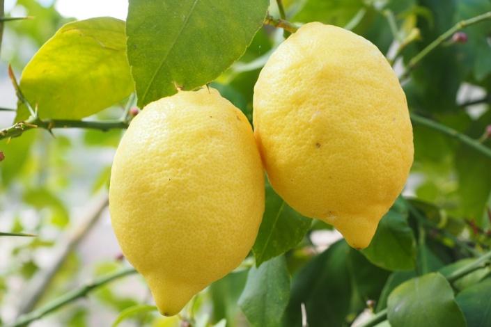 Лимоны. Фото с сайта www.pixabay.com