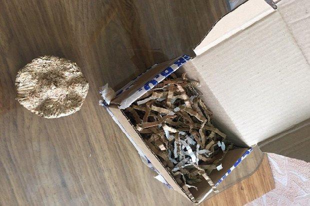 Житель Черемхово купил в интернете телефон, получил опилки. Фото ГУ МВД России по Иркутской области