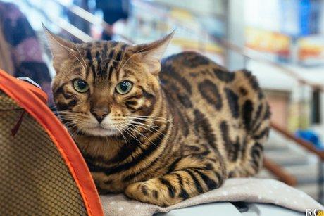 Кот. Автор фото — Зарина Весна