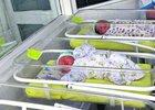 Новорожденные. Фото с сайта gtrk-saratov