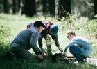 Высадка деревьев в Иркутске. Фото IRK.ru