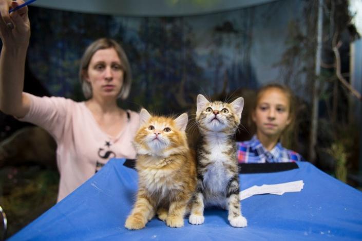 На выставке котят. Фото Валерии Алтарёвой