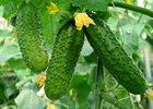 Фото с сайта www.fruitnews.ru
