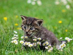 Выставка породистых котят в отделе природы Краеведческого музея