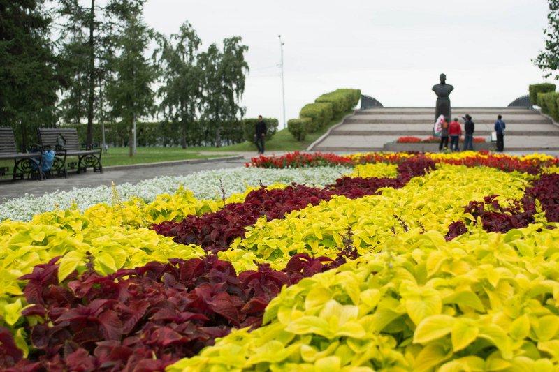 Цветы Фото На Клумбе