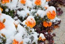Снег. Фото Ильи Татарникова