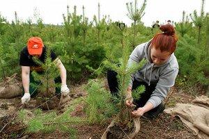 Посади дерево — подари планете жизнь