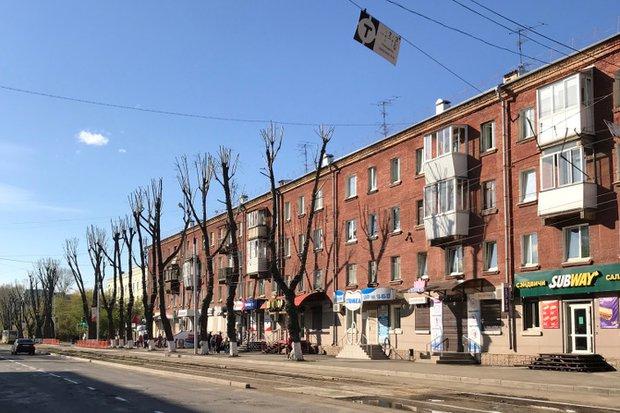 Обрезанные тополя на улице Декабрьских Событий
