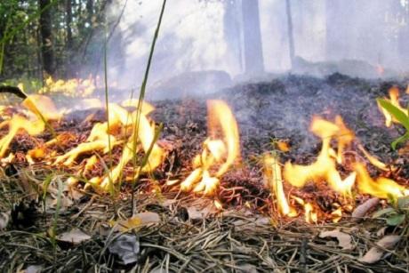 Площадь лесных пожаров в РФ превысила млн. гектаров