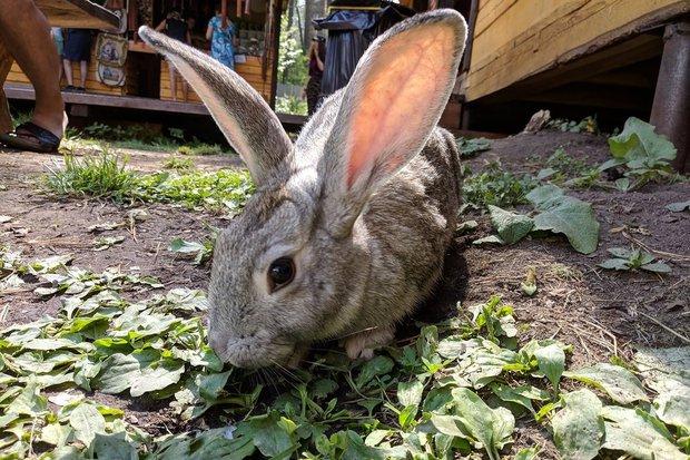 Кролик свободно гулял на территории возле водопада