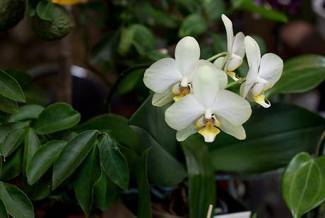 Орхидея. Автор фото — Анна Яковлева