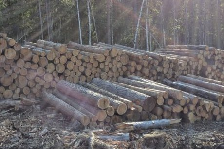Фото с сайта Байкальской межрегиональной природоохранной прокуратуры