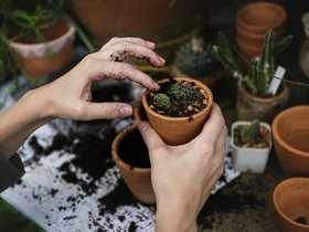 Зимний проект для садоводов и цветоводов «Раскрываем секреты растений»