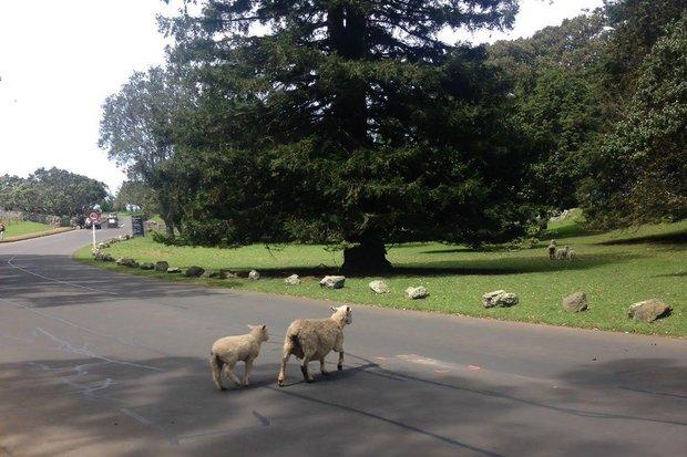 Корнуэлл парк в Окленде