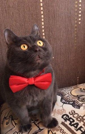 Мистер Пуф нарядился и к встрече Нового года, жаль не успели пошить фрак))