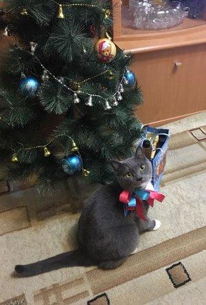 Дымка: Где тут мой подарочек?