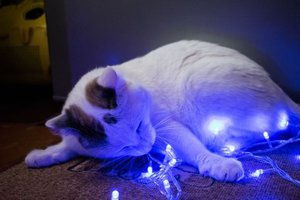 Типичный новогодний кот.
