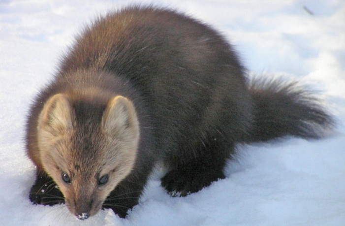 Фото с сайта wildfrontier.ru