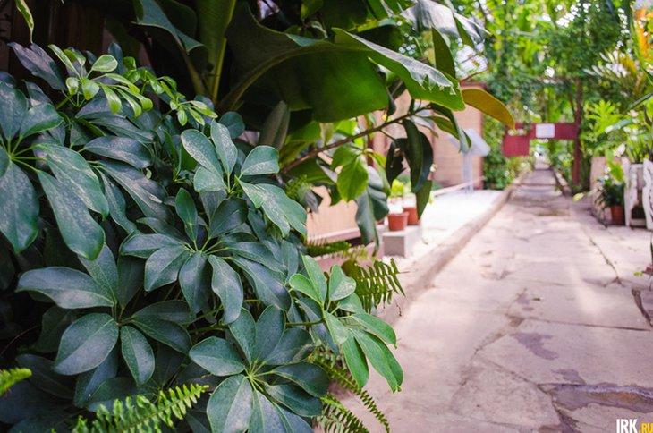В Ботаническом саду. Автор фото —Илья Татарников