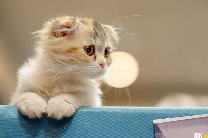 Котенок. Автор фото — Яна Ушакова