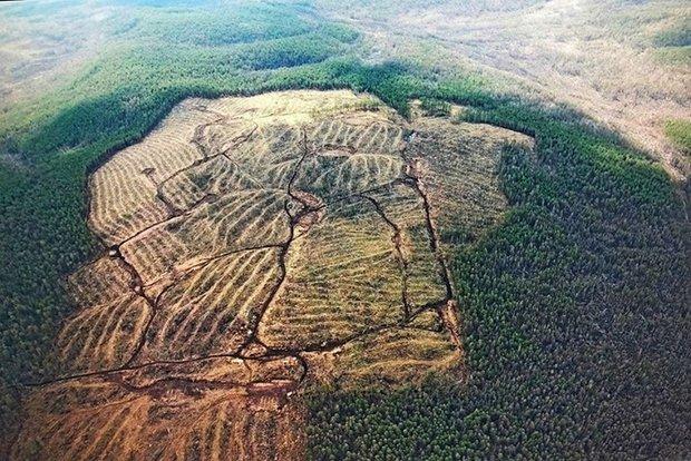 Туколонь. Фото предоставлено пресс-службой Байкальской межрегиональной природоохранной прокуратуры