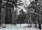 Роща на Синюшиной горе. Фото IRK.ru
