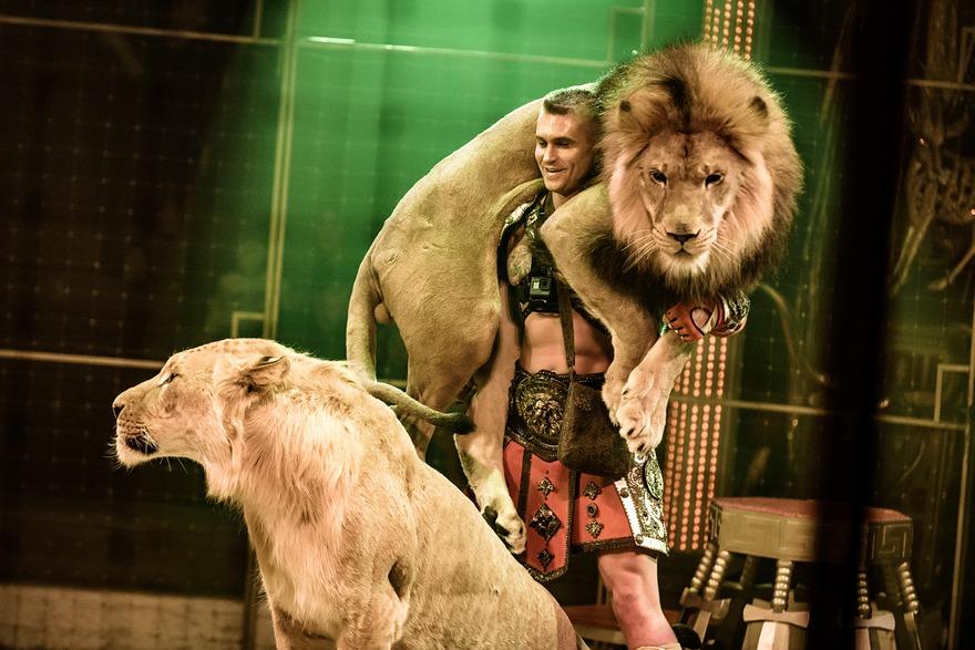 Изюминкой «Королевского цирка» стали номера с экзотическими животными