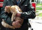 Спасённый кот. Фото usolie.info