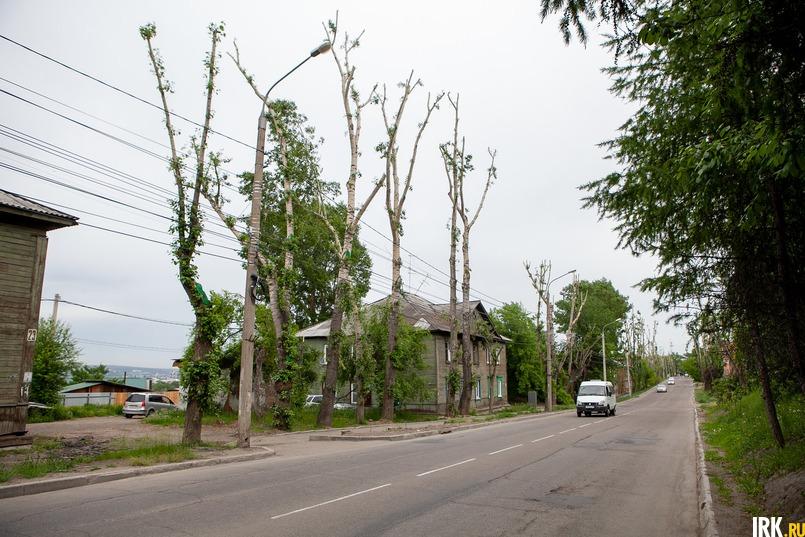 Иркутяне пожаловались, что на улице Чайковского спилили здоровые деревья