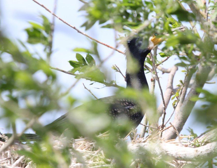С гнезда внимательно наблюдают