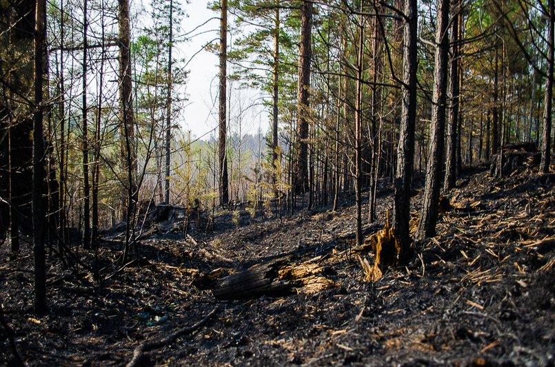 Лесные пожары зачастую используют как способ сокрытия преступления