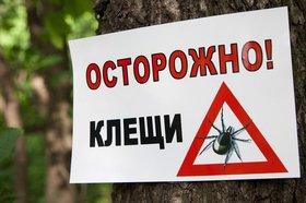 Фото с сайта tsimlyansk-gorod.ru