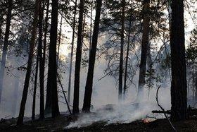Фото пресс-службы ФГБУ «Заповедное Прибайкалье»