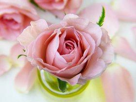 Выставка роз