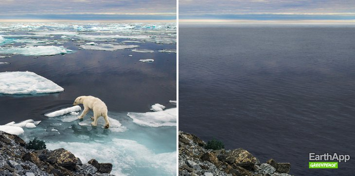 Фото с сайта greenpeace.ru