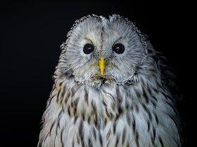 Ночная жизнь птиц