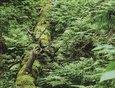 Маршрут простой, набора высоты практически нет, но усложняется постоянными спусками-подъёмами. Пешеходная тропа петляет по лесу, на пути много поваленных деревьев, папоротники и огромные реликтовые тополя.