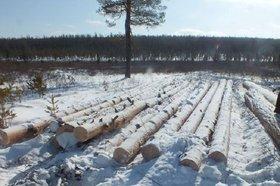 Фото с сайта nexplorer.ru