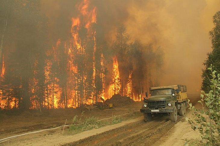 Рослесхоз оценил вред отприродных пожаров в7 млрд. руб.