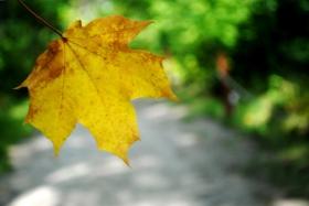 Осенние экскурсии в Ботаническом саду