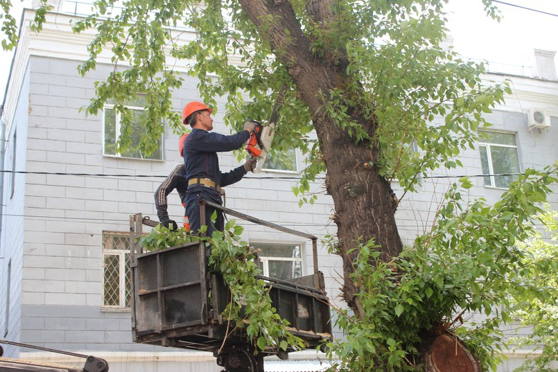 Обрезка деревьев в Иркутске. Фото IRK.ru