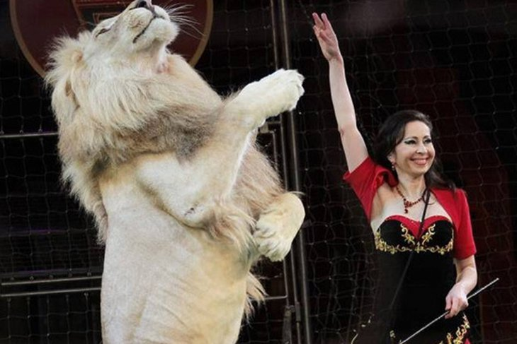 Шоу «Белые львы Африки». Фото предоставлено организаторами