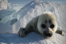 Фото Алексея Трофимова с сайта vk.com