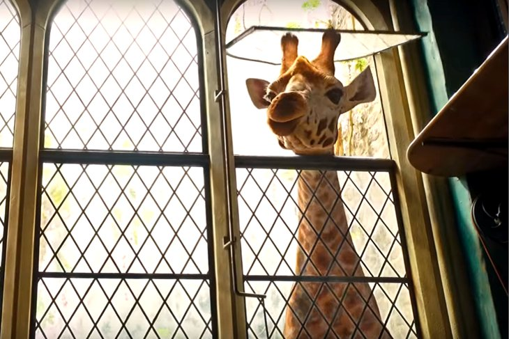 Фильм основан на одноименном романе Хью Лофтинга и рассказывает о приключениях ветеринара, умеющего разговаривать с животными