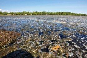 Жидкие отходы БЦБК. Фото Юрия Новикова
