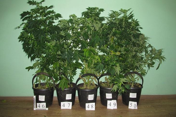 Выращивание конопли гидропонным способом как действуют наркотики марихуана онлайн