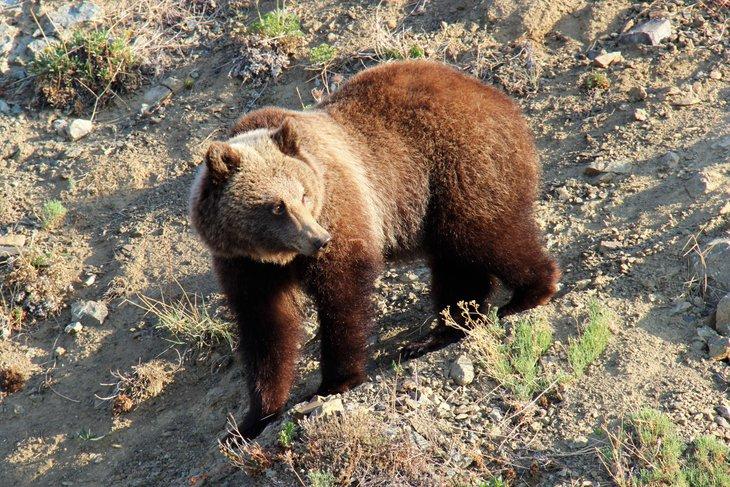 Медведь. Фото Умара Рамазанова